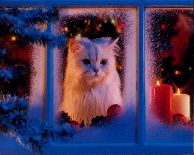 Wie Malt Man Süße Katze Poster Dehellokidscom