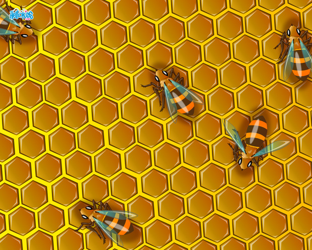 Bienen in einem Bienenstock